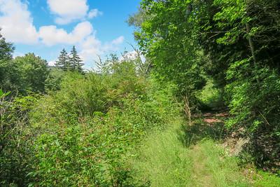 Buckeye Gap Trail -- 5,470'