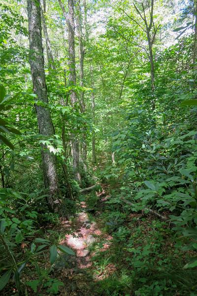 Buckeye Gap Trail -- 4,440'