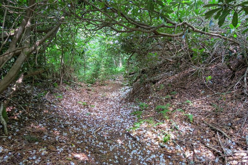 Buckeye Gap Trail -- 5,340'