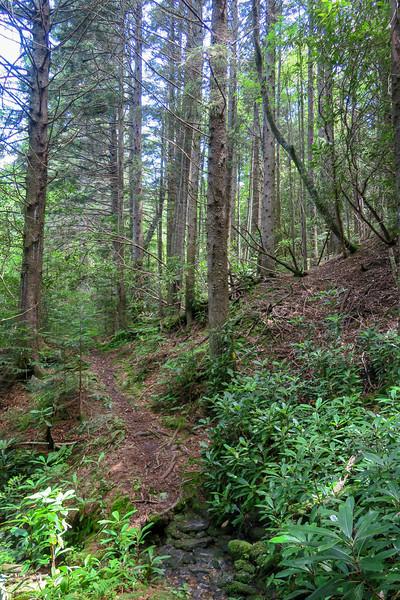 Buckeye Gap Trail -- 5,510'