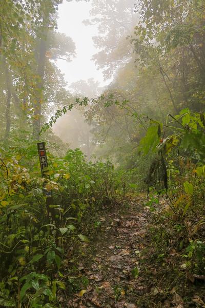 Buckhorn Gap Trail/F.R. 5058 Lower Junction -- 3,160'