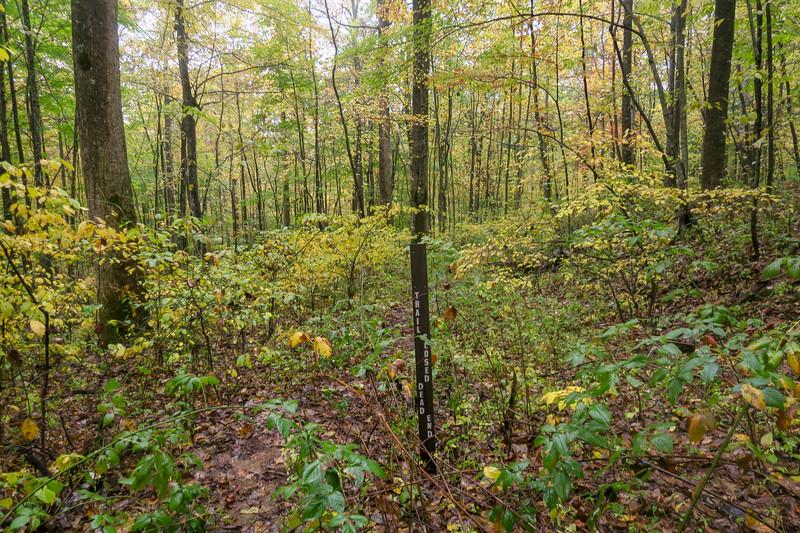 Buckhorn Gap Trail @ Unnamed Logging Road -- 2,960'