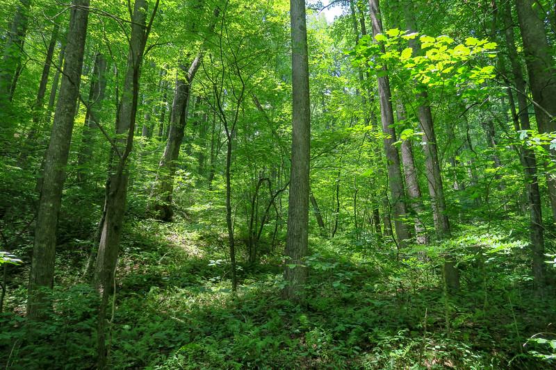 Buckhorn Gap Trail -- 3,480'