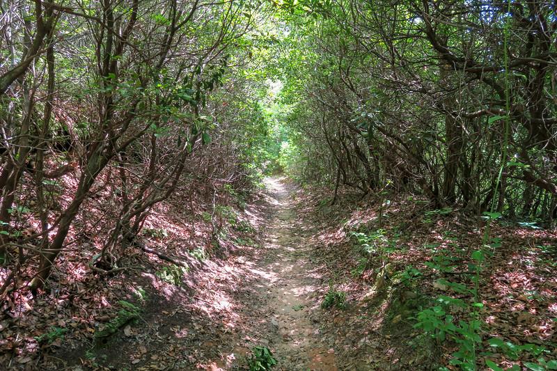 Buckhorn Gap Trail -- 3,440'