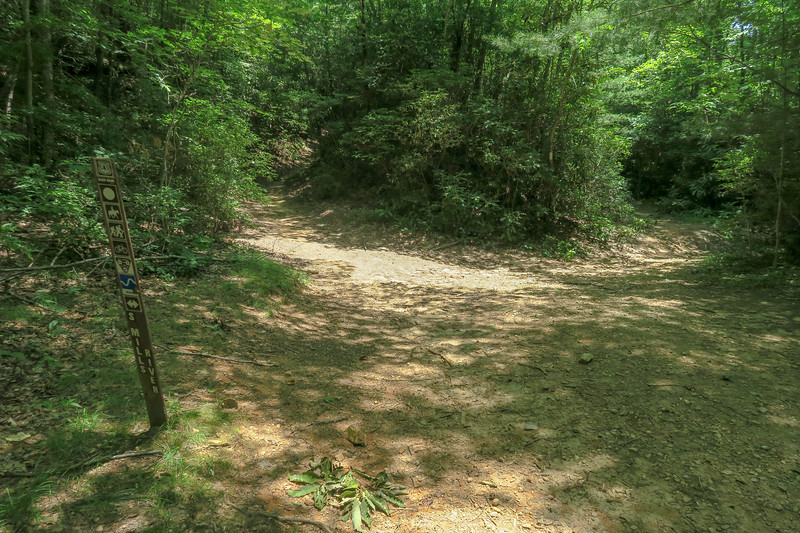 Buckhorn Gap/South Mills River Trail Junction -- 3,290'