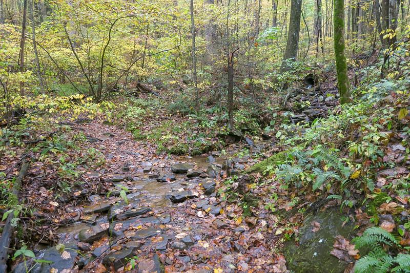 Buckhorn Gap Trail -- 2,950'