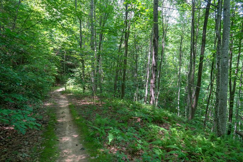 Buckhorn Gap Trail -- 3,500'