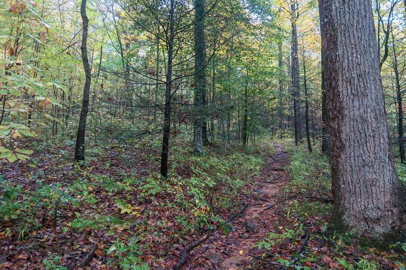 Buckhorn Gap Trail -- 3,020'