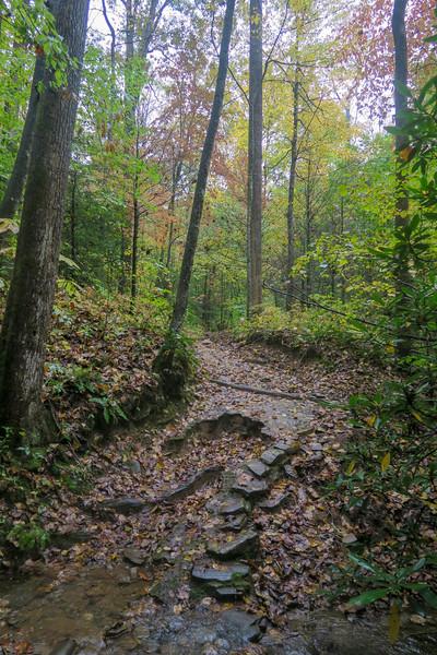 Buckhorn Gap Trail -- 2,820'