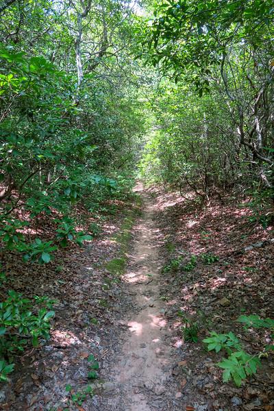 Buckhorn Gap Trail -- 3,340'