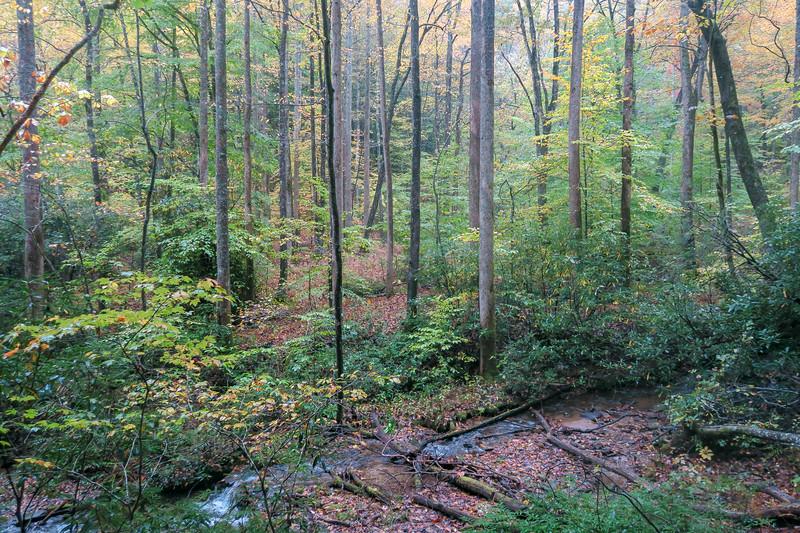 Buckhorn Gap Trail -- 2,720'