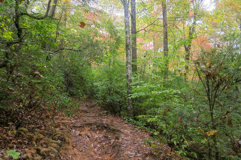 Buckhorn Gap Trail -- 2,800'