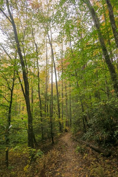 Buckhorn Gap Trail -- 2,710'