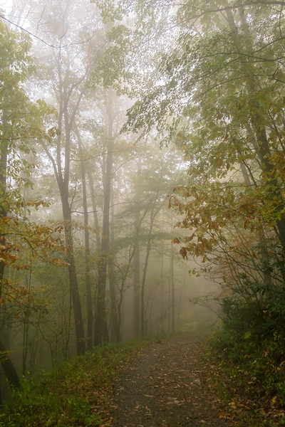 Buckhorn Gap Trail (F.R. 5058) -- 3,250'