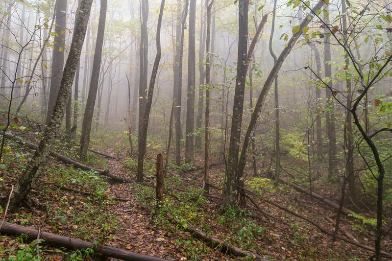 Buckhorn Gap Trail -- 3,460'