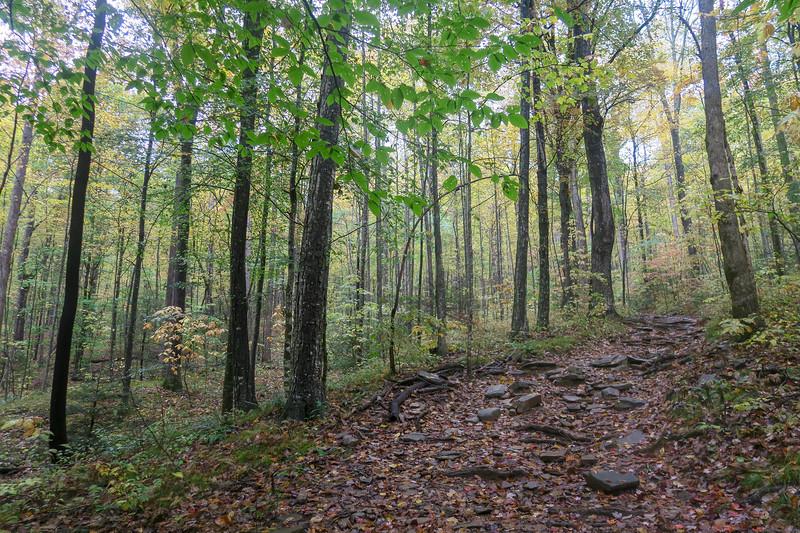 Buckhorn Gap Trail -- 2,880'
