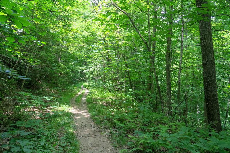 Buckhorn Gap Trail -- 3,540'