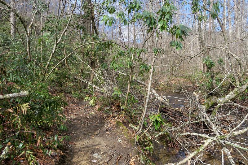 Buckhorn Gap/Avery Creek Trail -- 2,570'
