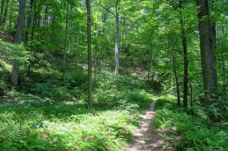 Buckhorn Gap Trail -- 3,360'