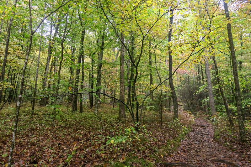Buckhorn Gap Trail -- 2,850'