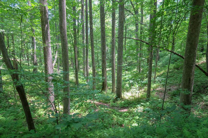 Buckhorn Gap Trail -- 3,350'