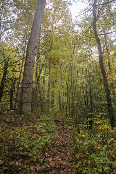 Buckhorn Gap Trail -- 3,070'