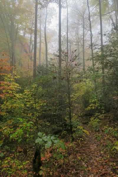 Buckhorn Gap Trail -- 3,370'