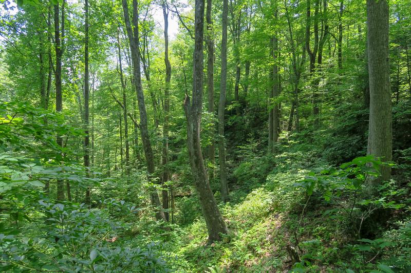 Buckhorn Gap Trail -- 3,380'