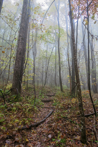 Buckhorn Gap Trail -- 3,420'