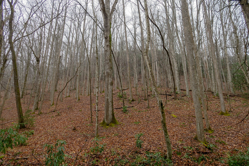 Buckhorn Gap Trail -- 2,660'