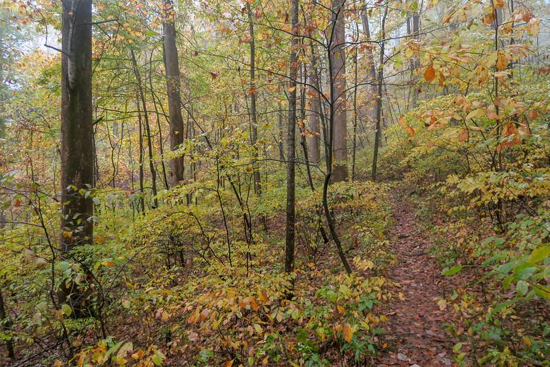 Buckhorn Gap Trail -- 3,130'