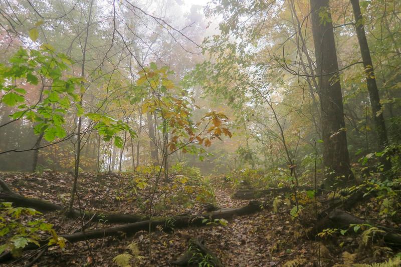Buckhorn Gap/Black Mountain Trail Junction (Buckhorn Gap) -- 3,550'