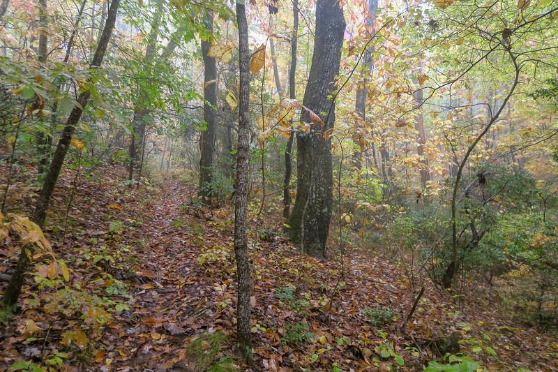 Buckhorn Gap Trail -- 3,400'