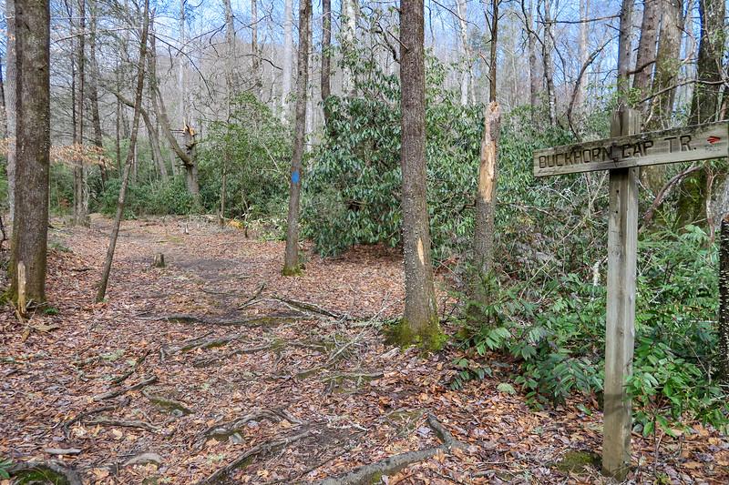 Buckhorn Gap/Avery Creek Trail Upper Junction -- 2,580'