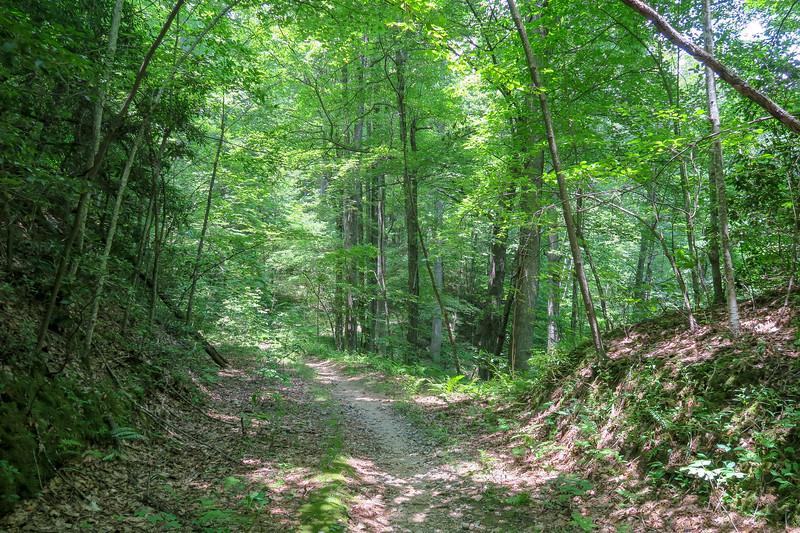 Buckhorn Gap Trail -- 3,520'