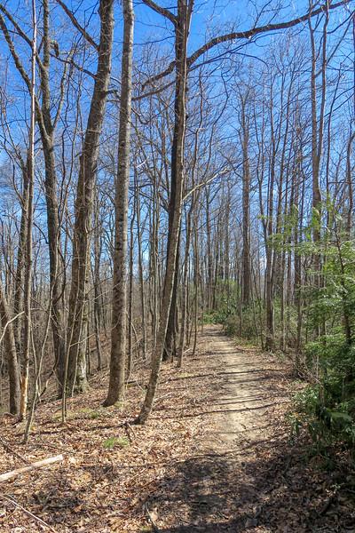 Buckwheat Knob Trail -- 3,550'