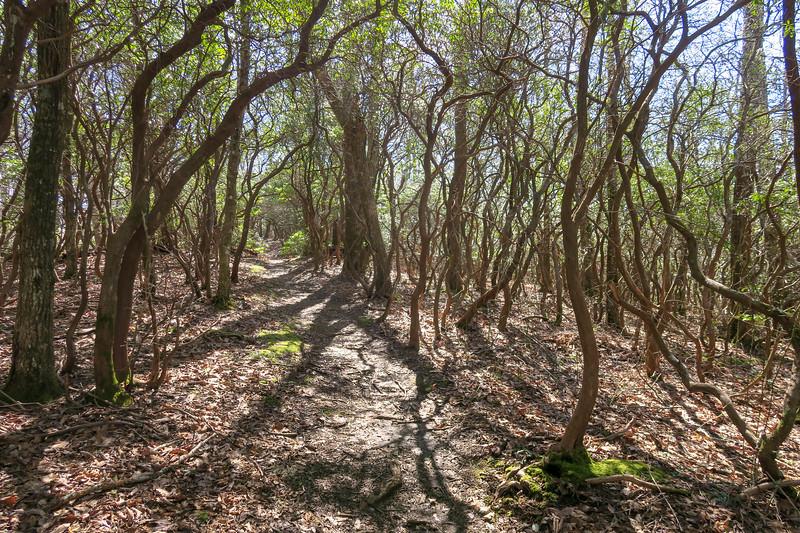 Buckwheat Knob Trail -- 3,800'