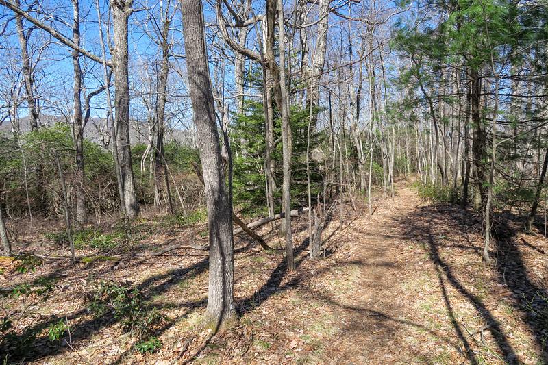 Buckwheat Knob Trail -- 4,009'