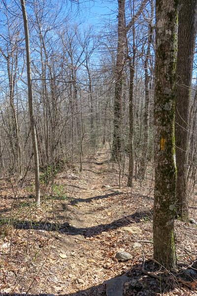 Buckwheat Knob Trail -- 3,750'