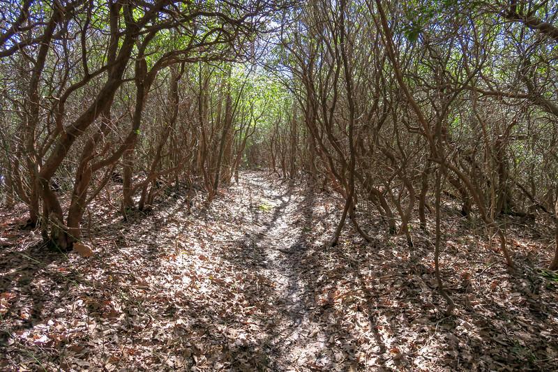 Buckwheat Knob Trail -- 3,980'