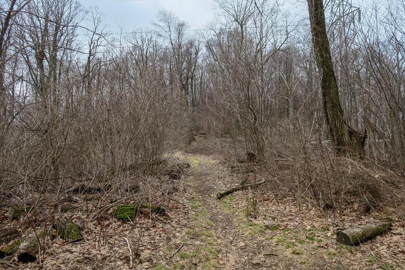 Buckwheat Knob Trail @ Club Gap -- 3,780'