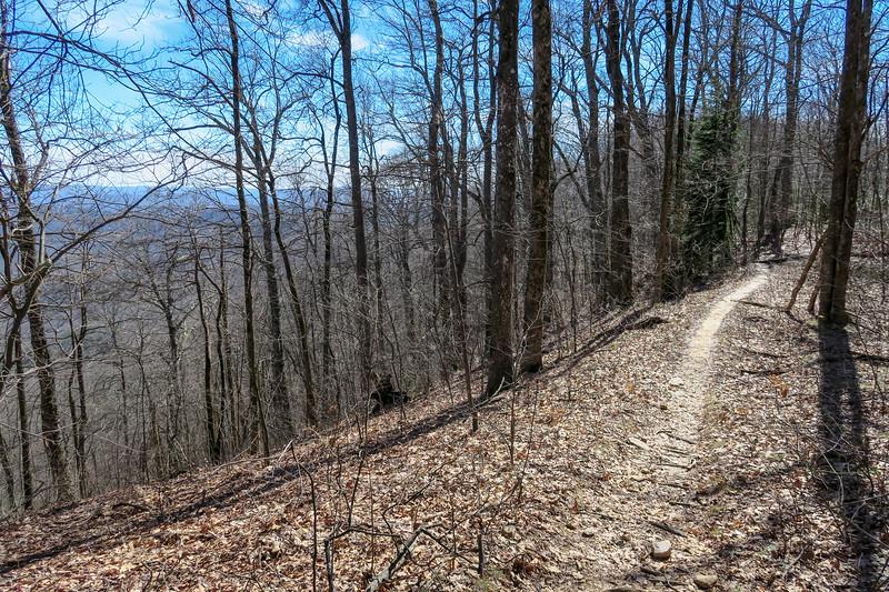 Buckwheat Knob Trail -- 3,990'