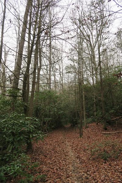 Butter Gap Trail -- 2,660'