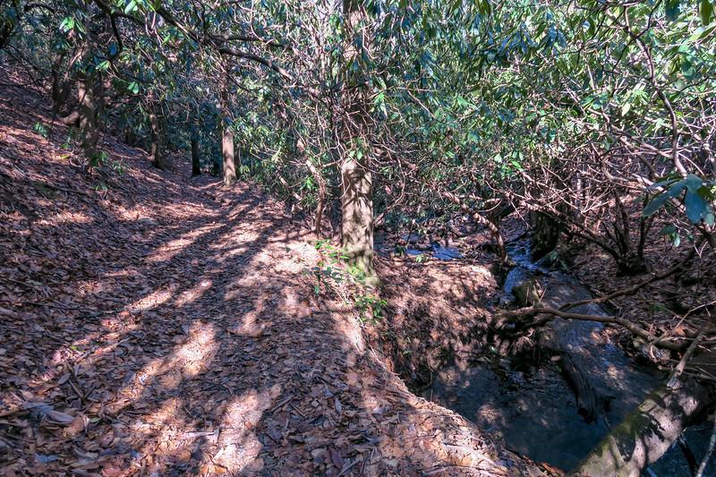 Butter Gap Trail -- 3,120'