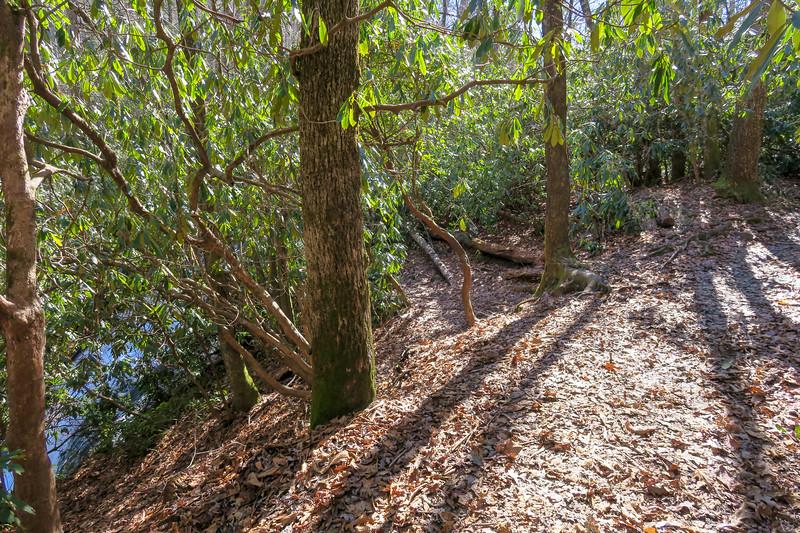 Butter Gap Trail @ Grogan Creek Falls -- 2,720'