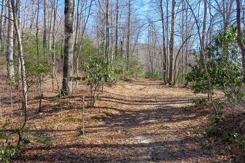 Butter Gap/Art Loeb Trail East Junction (Butter Gap) -- 3,300'