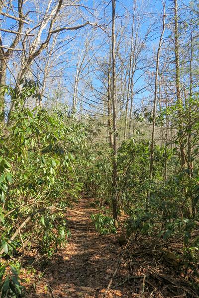 Butter Gap Trail -- 2,760'