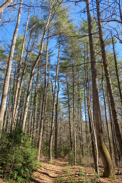Butter Gap Trail -- 2,800'