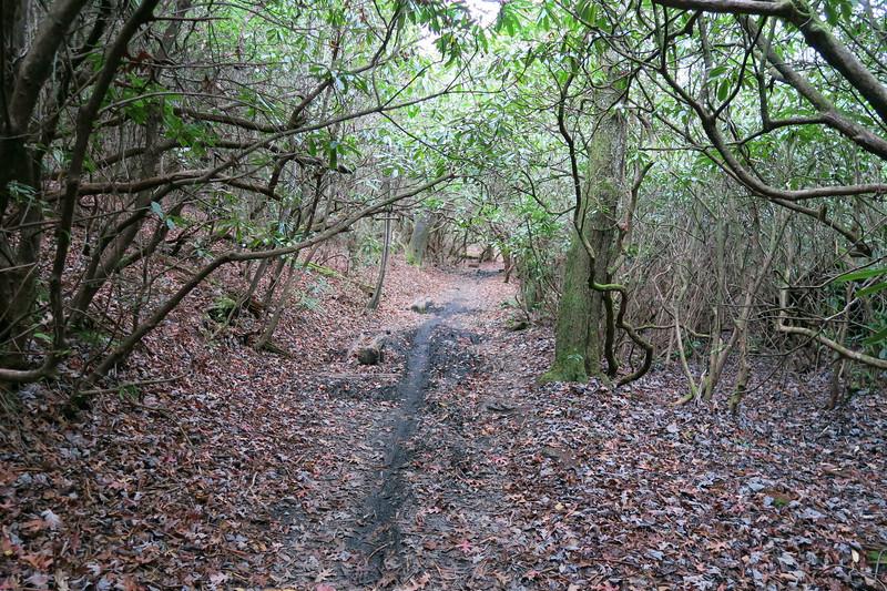 Butter Gap Trail -- 2,640'