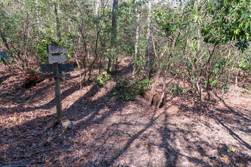 Butter Gap/Long Branch Trail Junction -- 2,680'